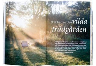 Drabbad-av-den-vilda-trädgården300