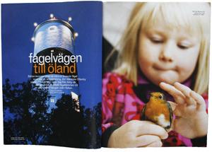 Fågelvägen-till-Öland300