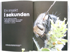 En-insekt-i-sekunden300